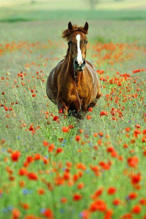 Horse in a field of flowers | Horses | Pinterest