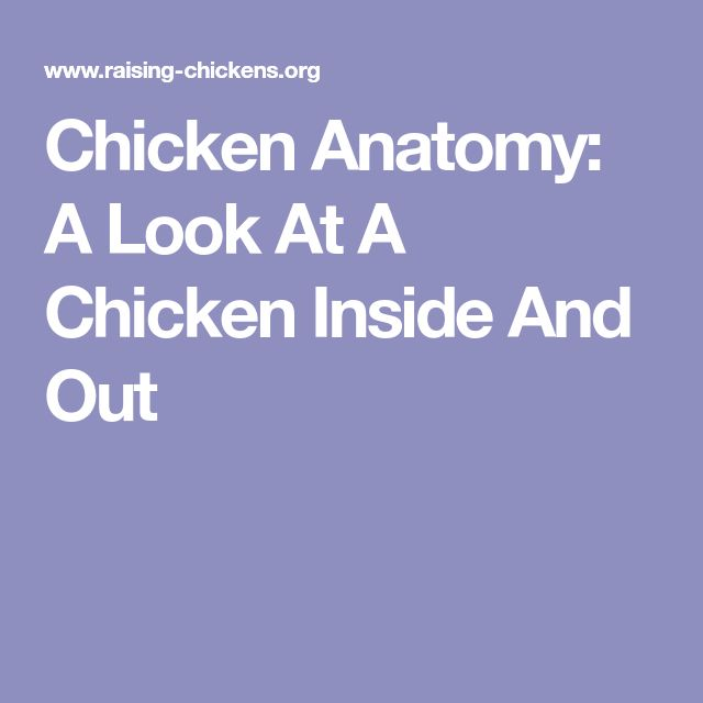 Chicken Anatomy: A Look At A Chicken Inside And Out