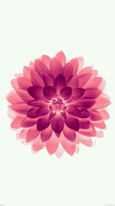Iphone 6 wallpaper tumblr flowers - Iphone 6 Iphone 6 Plus Wallpapers