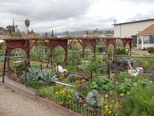 13 best I love allotment gardens images on Pinterest | Allotment ...