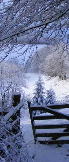 Winter at Love North Devon, a 53 acre organic estate on the edge of Exmoor in North Devon