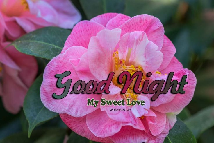 Good Night Wishes For Whatsapp Images Free Download