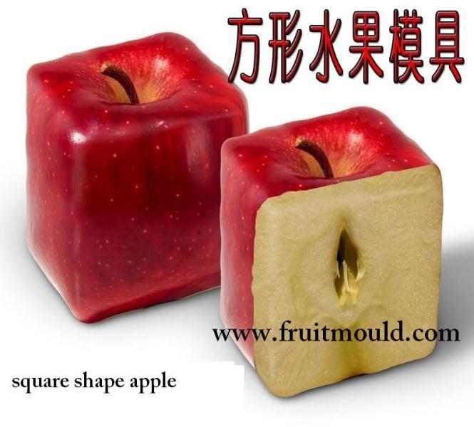 fruit plaatje - Hledat Googlem