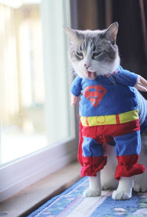 A Cat Sticking Out Its Tongue While Wearing A Superman