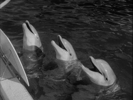 Dauphins in Love/ Igraszki delfinów [video] (Repozytorium Cyfrowe Filmoteki Narodowej) #repozytoriumcyfrowe, #dauphins