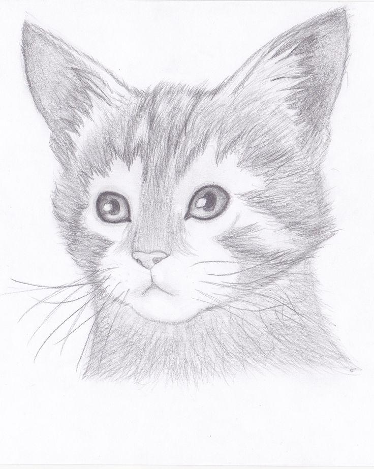 Sketch of a kitten - I drew it with this yt tutorial: https://www.youtube.com/watch?v=xx6wBLkMCkI