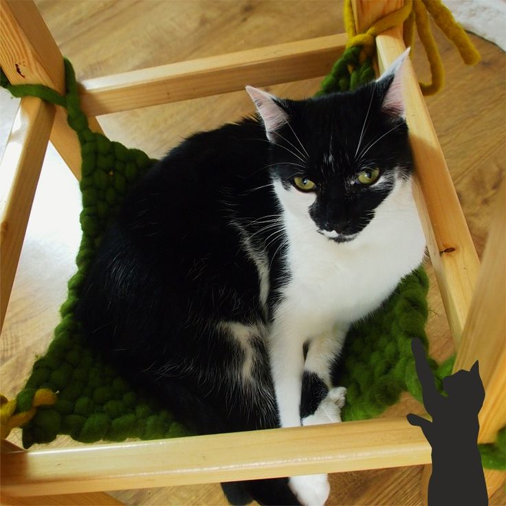 cat and hammock myCATelier.com/sklep