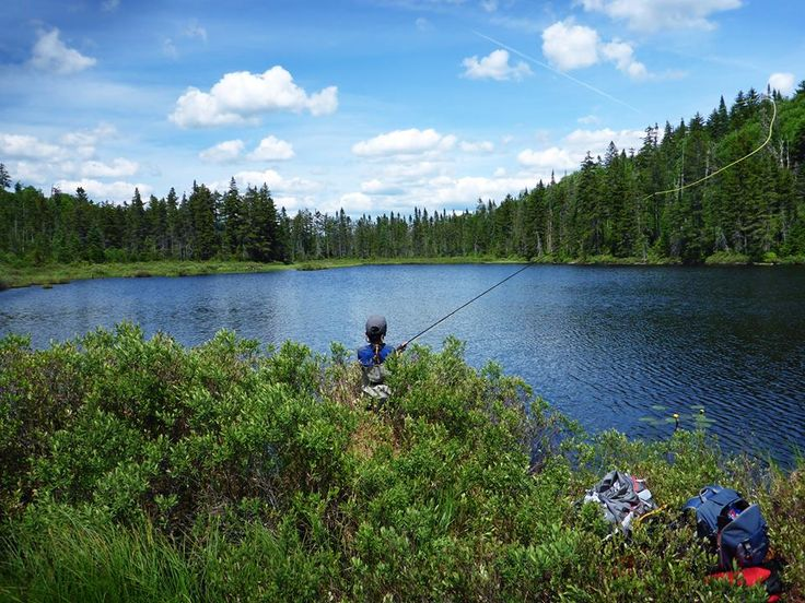 17 best images about ponds of pittsburg new hampshire on for Best trout fishing in new hampshire