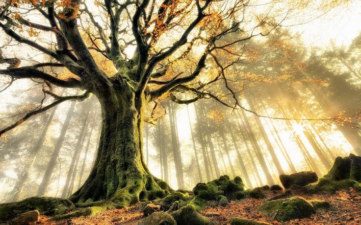 L'astrologie celtique rapproche l'Homme et la nature. L'arbre protecteur définit le caractère d'un individu et le contact qu'il entretient avec la terre.