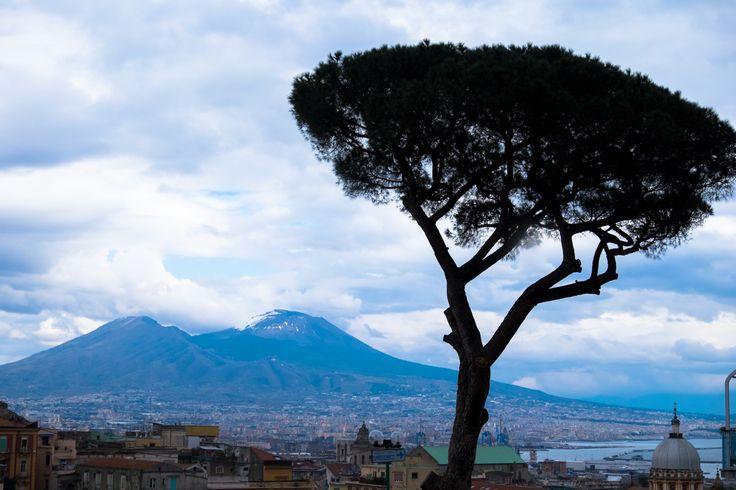 Pine and Vesuvius, two symbols of Naples
