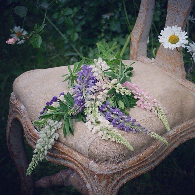 New week in the best of times. #antik #antikviteter #antique #antiques #swedishantiques #antiek #zweedsantiek #garden #trädgård #chair #stol #rococo #rokoko #18thcentury #1700tal #originalfärg #originalpaint #lupiner #lupin #masterhenriks #masterhenriksantik