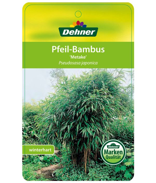 Breitblatt Bambus Dehner In 2020 Bambus Pflanzen Bambus Pflanzen