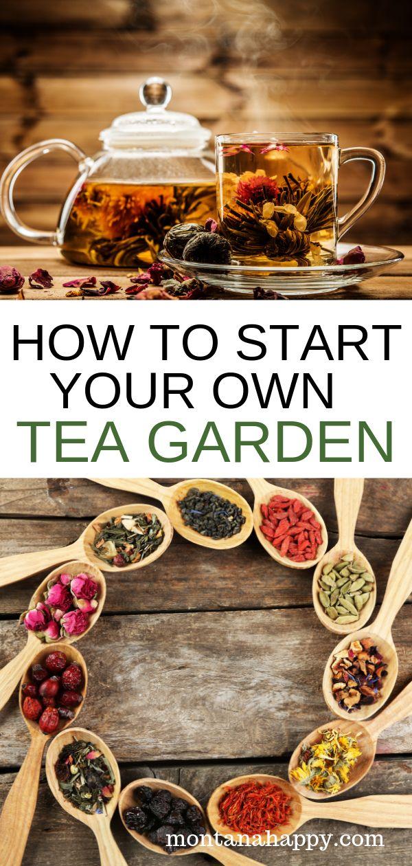 HOW TO GROW YOUR OWN TEA GARDEN
