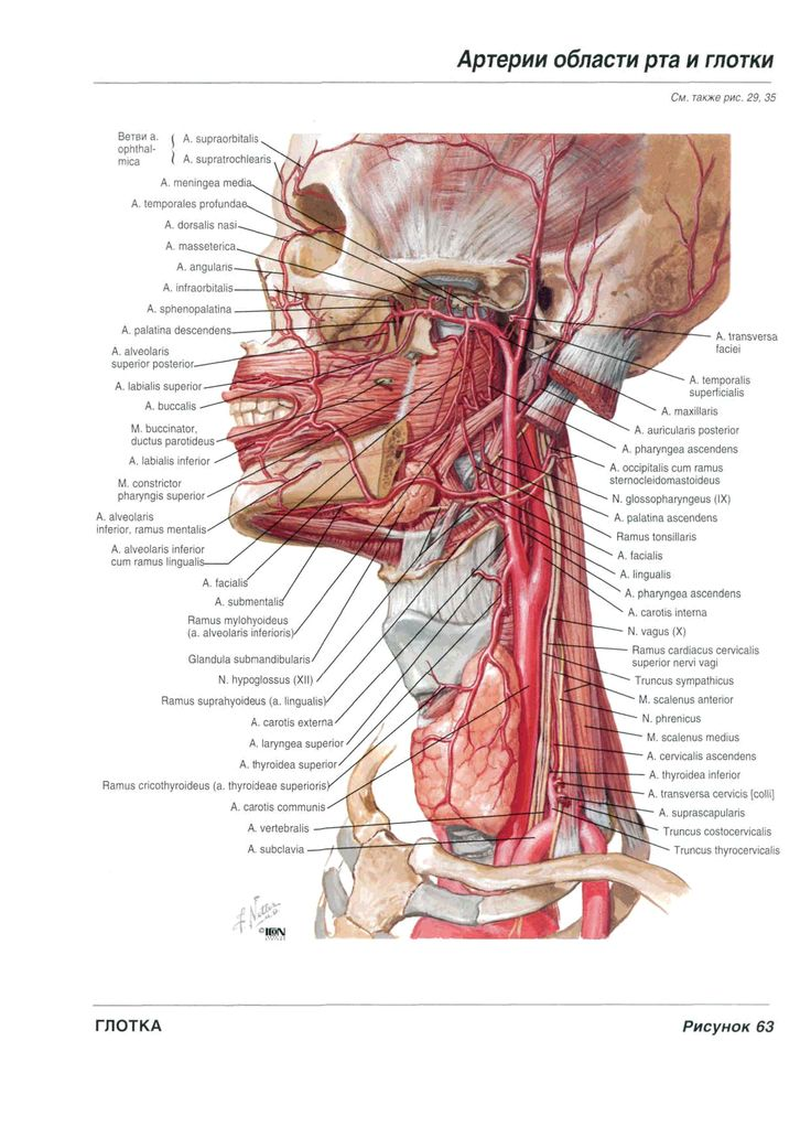 9 best 의학 images on Pinterest | Anatomy, Anatomy reference and ...