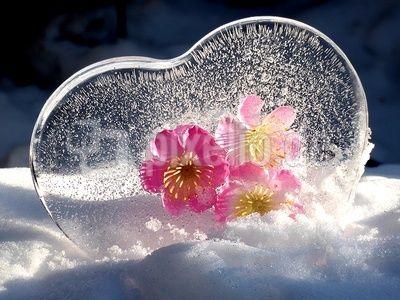 Herz aus Eis mit Blumen