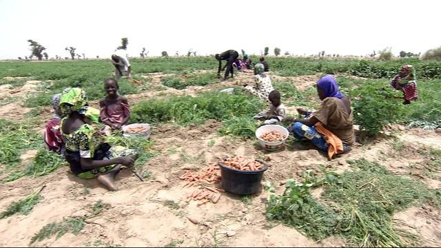 The risk of mass starvation in Nigeria, South Sudan, Yemen and Somalia is rapidly rising due to drought and conflict, the UN refugee agency has warned. Farmers in northern Nigeria say their situation is made worse by violence from Boko Haram.