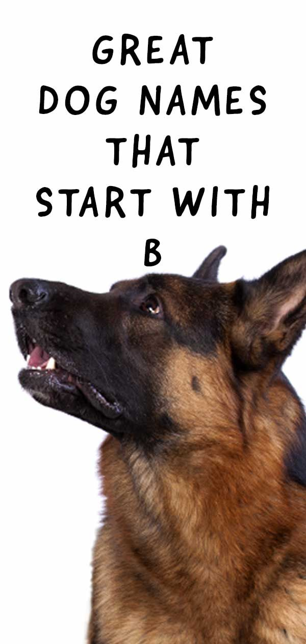 Dog Names That Start With B Beautiful