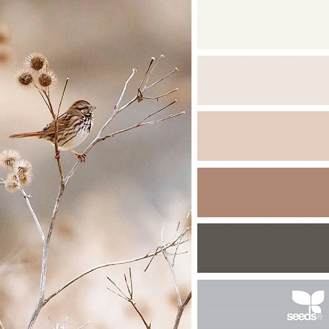 today's inspiration image for { creature color } is by @julie_audet ... thank you, Julie, for another incredible #SeedsColor image share!