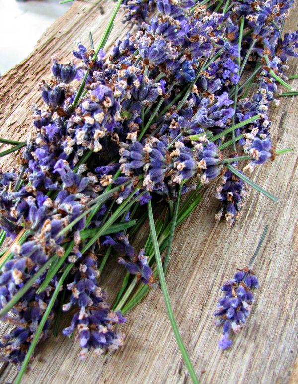 Port Arthur #Lavender #Tasmania Photo and article for think-tasmania.com