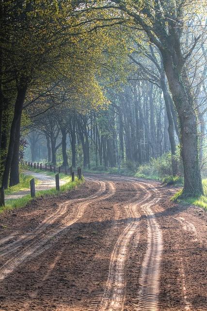 pad Uffelte, Drenthe, The Netherlands Inspiratie voor mooie bos- interieurs…