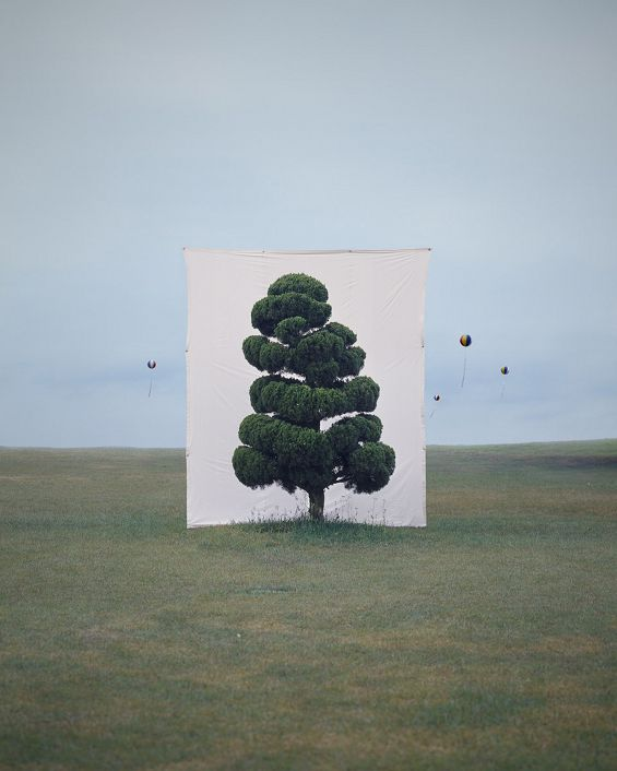 A tree is just a tree. That is, until you put a... | Exhibition-ism