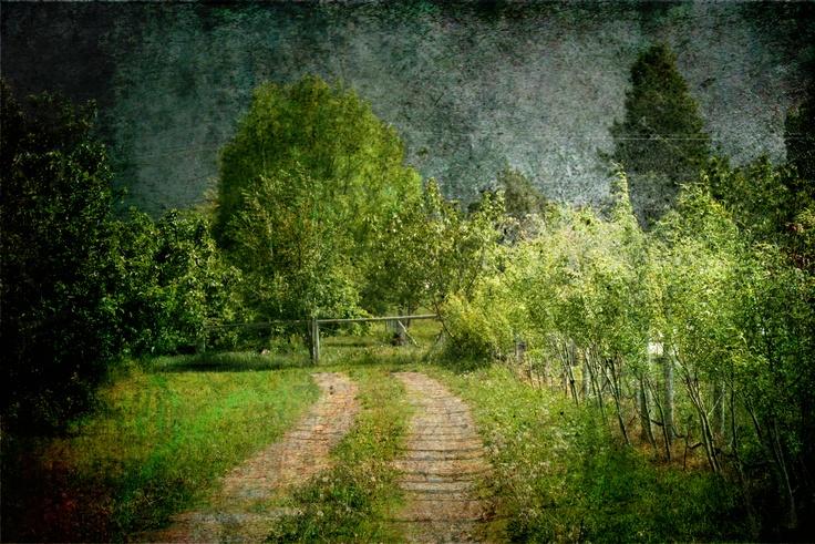 curly willow lane