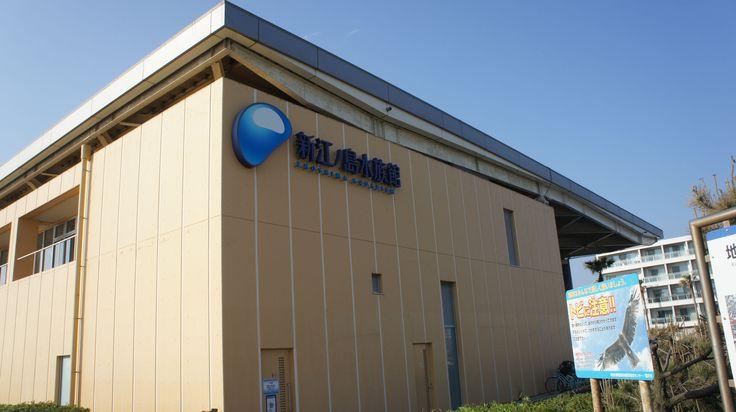 【新江ノ島水族館(Enoshima Aquarium)】見所は相模湾大水槽。巨大な水槽内には、数千匹のいわしの群れがまるで一つの生き物のように固まって泳いでいます。季節によって様々なイベントも開催。住所:〒251-0035 神奈川県藤沢市片瀬海岸2-19-1 TEL:0466-29-9960 営業時間 9:00~17:00 (冬季は10:00から/シーズンによって異なる) 年中無休 入場料:大人2,100円/高校生1,500円/中学生小学生1,000円/幼児(3歳以上)600円