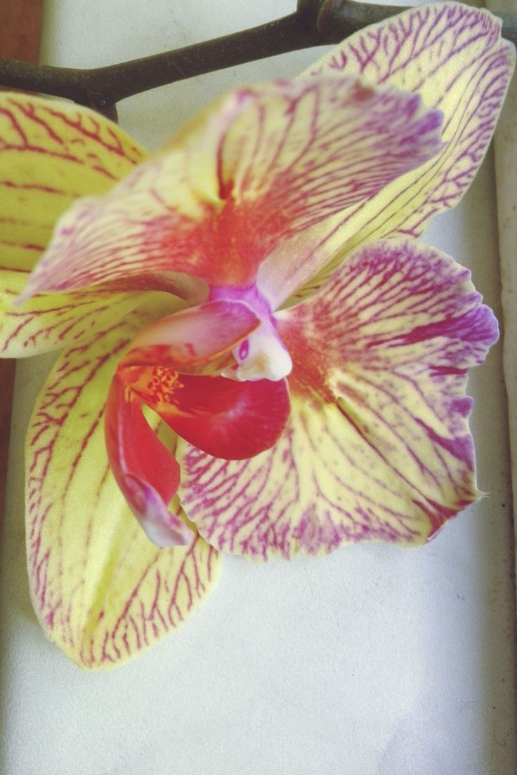 orchids are so pretty to stare at while you work...