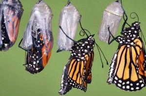 van rups tot vlinder - Google zoeken