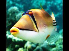 Картинки по запросу подводный мир египта