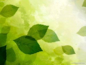 HDR Green Leaves Background | HD PowerPoint Templates