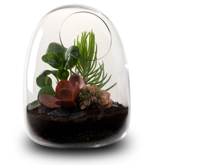Awesome Hand Blown Glass Terrariums From Bevara Design Part 28