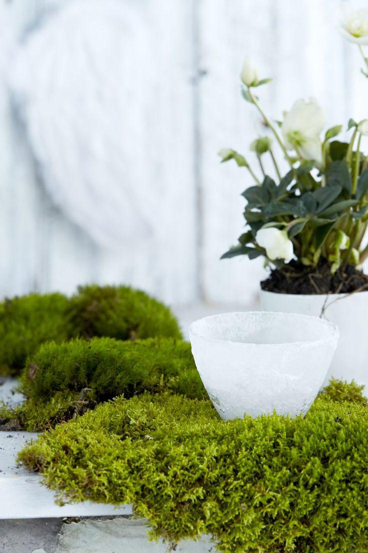 Kasvata suolasta huurteinen tuikku | Kodin Kuvalehti