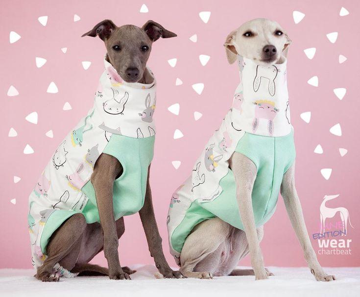 ubranka dla charcików włoskich / italian greyhound clothes #italiangreyhound #italiansighthound #charcikwłoski #dogclothes #dogwear #bunny