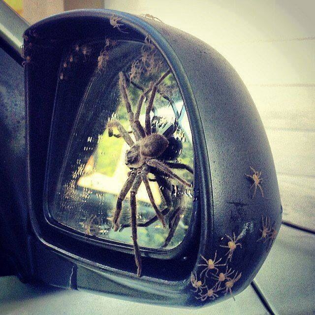 How To Get Rid Of Spiders In Your Car Mirror