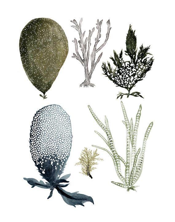 Sea Botanicals 1 11x14 print by KatieVernon on Etsy, $30.00