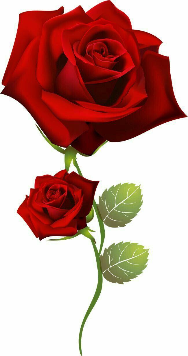 Pin De Patricia Lainnez Em Marcos Belas Rosas Vermelhas Flores