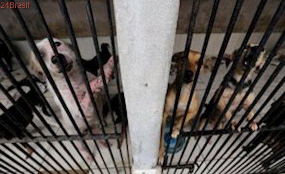 PM mobiliza torcedores de time de futebol para ajudar abrigo de animais