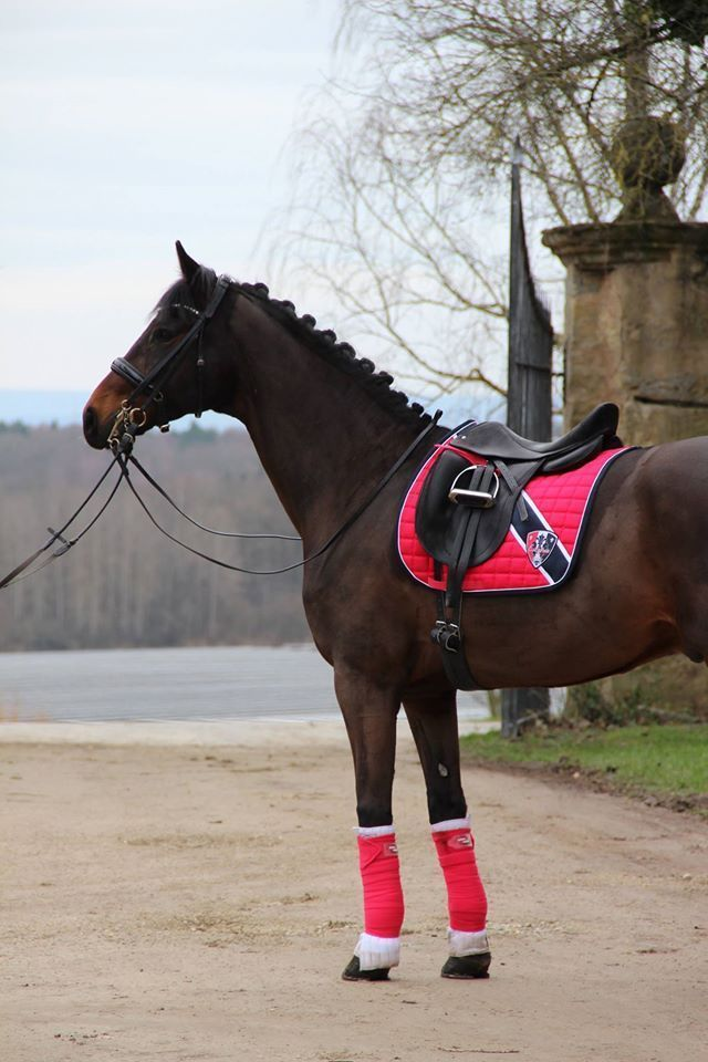 Image result for chestnut horse tack color