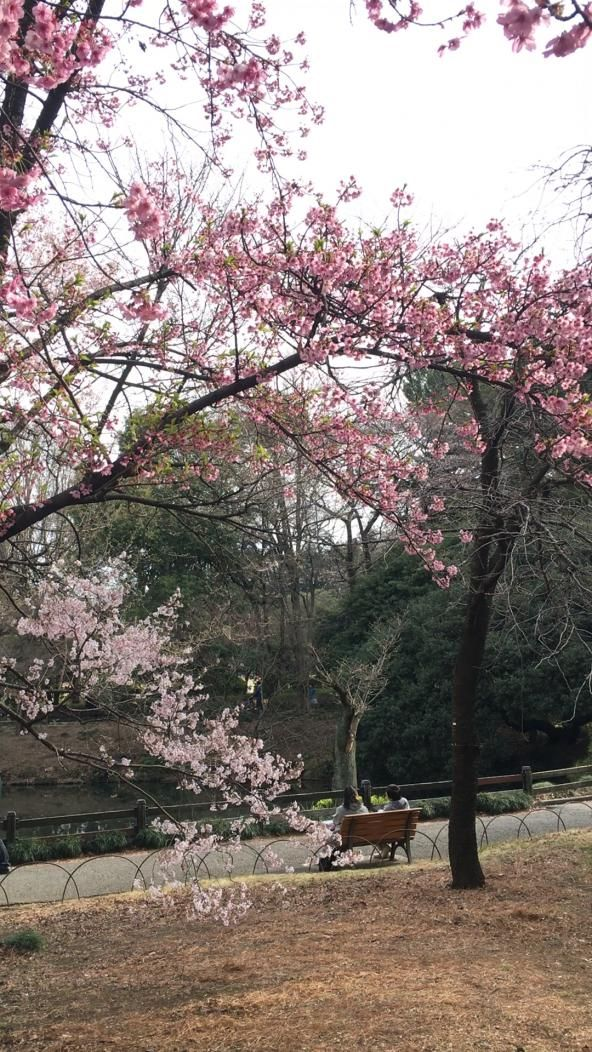 It S Beautiful Cherry Blossom Sakura Season In Japan And We Re Giving You All The Insider Inform Cherry Blossom Japan Aesthetic Japan Japanese Cherry Blossom
