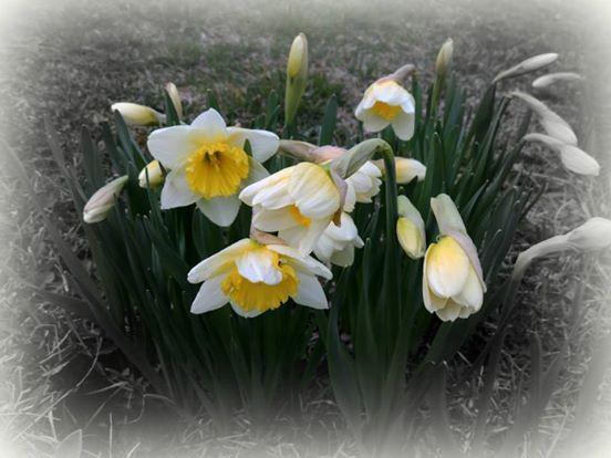 prvé kvety #KVITAL#