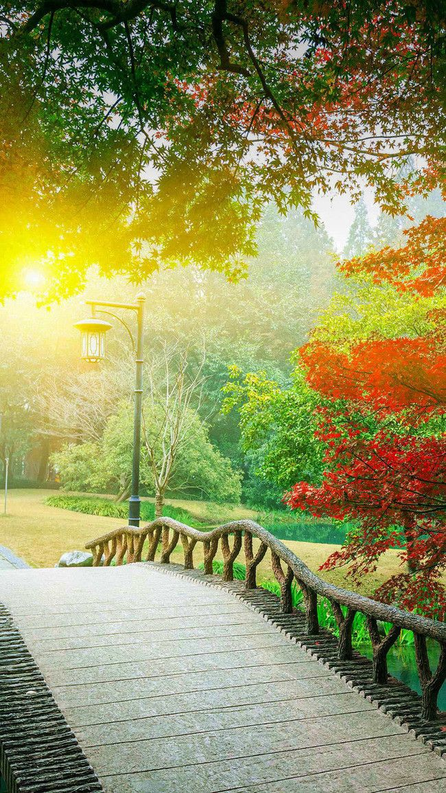 Hd Romantic Afternoon Park Background Romantic Background Light Background Images Photoshop Backgrounds Backdrops