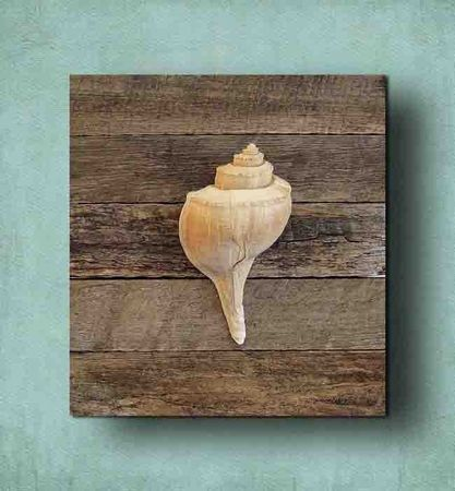 DIY idea. Mount one shell on a wood board.