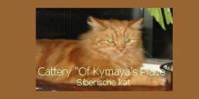Siberische Kat cattery's Nederland