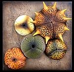 """Andy Rogers - """"Tide Pool Wall Sculpture #4""""Wall Hanging, Level United, Gfhs Sculpture, Tide Pools, Pools Wall, Beautiful Design, Andy Rogers, Ceramics Artists, Artists Reference"""