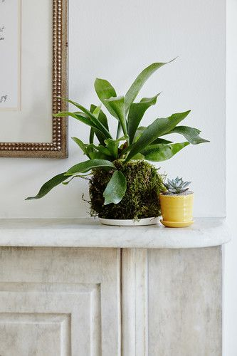buy these 7 houseplants before everyone else does