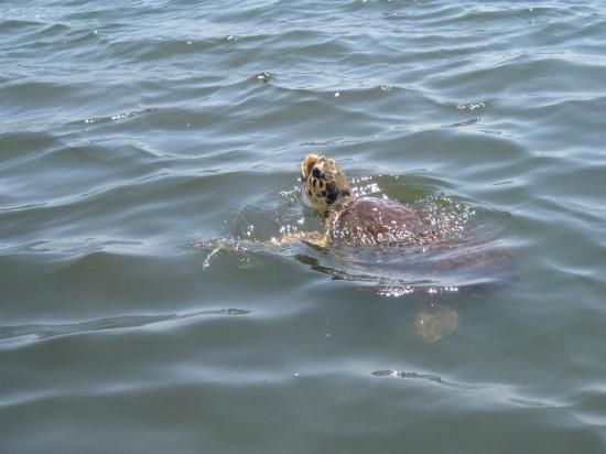 Dalyan River: Spotted a turtle on the way there