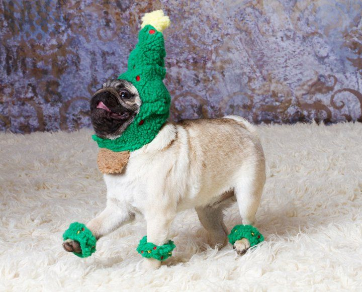 I'm quite certain that dogs really don't look forward to Christmas.