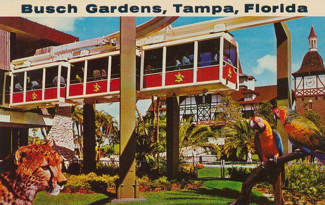 17 Best Images About Busch Gardens Tampa Bay Fl On Pinterest Gardens Tampa Bay Fl And Parks