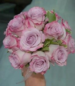 'Purple Haze' rose
